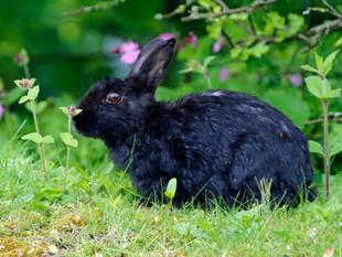 Black Rabbit Black Rabbit Black Rabbit