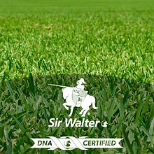 sir-walter-product-image-square.jpg