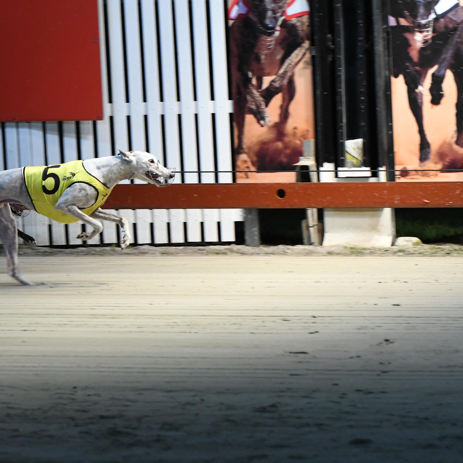2018 Sprinters Cup Winner Cosmic Bonus.J