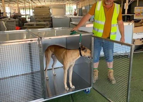Rusty in New Kennels.jpg