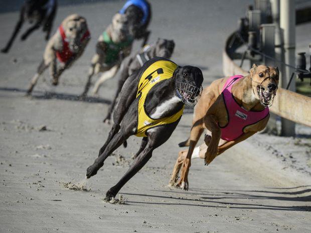 Greyhounds2.JPG