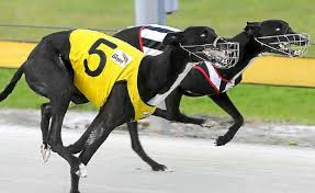 Greyhounds1.jpg