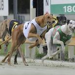 Greyhounds3.jpg