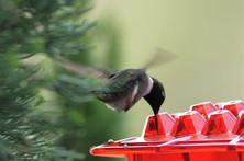 Mullens H Bird.jpg
