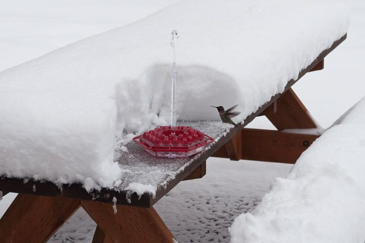 Snowbird 1.jpg