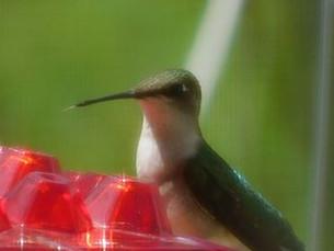 Barbara H bird shot..jpg