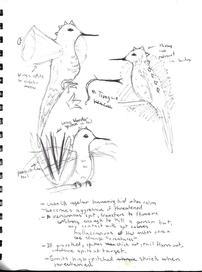 Creature Poster Assignment Design Sketch sheet.jpg