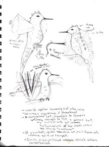 Creature Poster Assignment Design Sketch