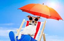 dog-sunbathing-on-deck-chair-260nw-99624