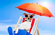 dog-sunbathing-on-deck-chair-260nw-99624