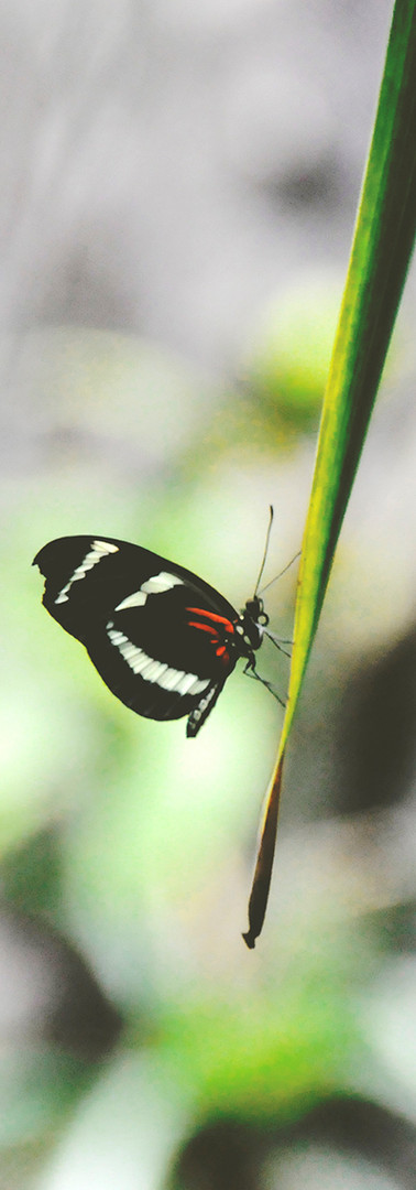 Butterflies Transform Their Molecular Structure.