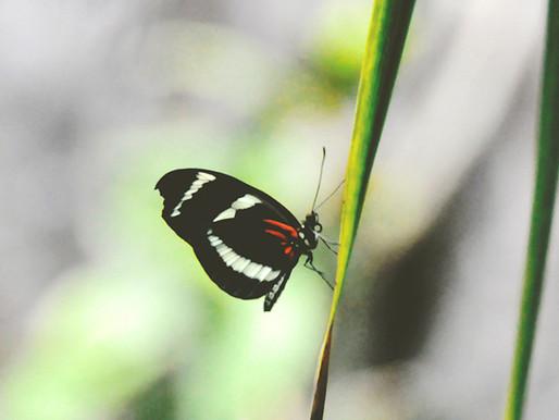 Da bruco a farfalla: storia vera di una trasformazione professionale (*)