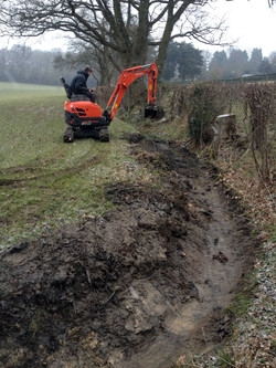 broad leaf ground maintenance 7.JPG