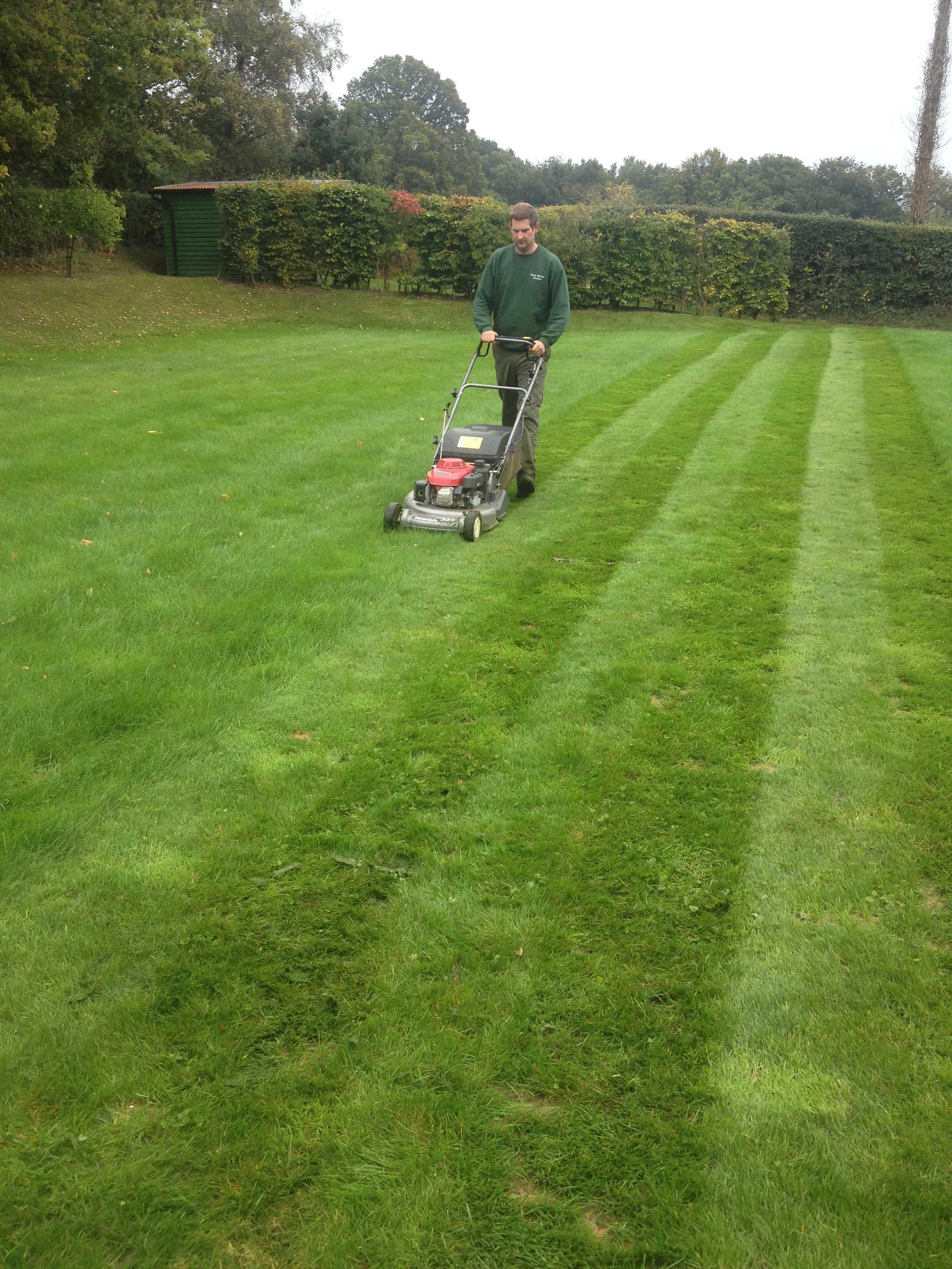 broad leaf ground maintenance 40.JPG