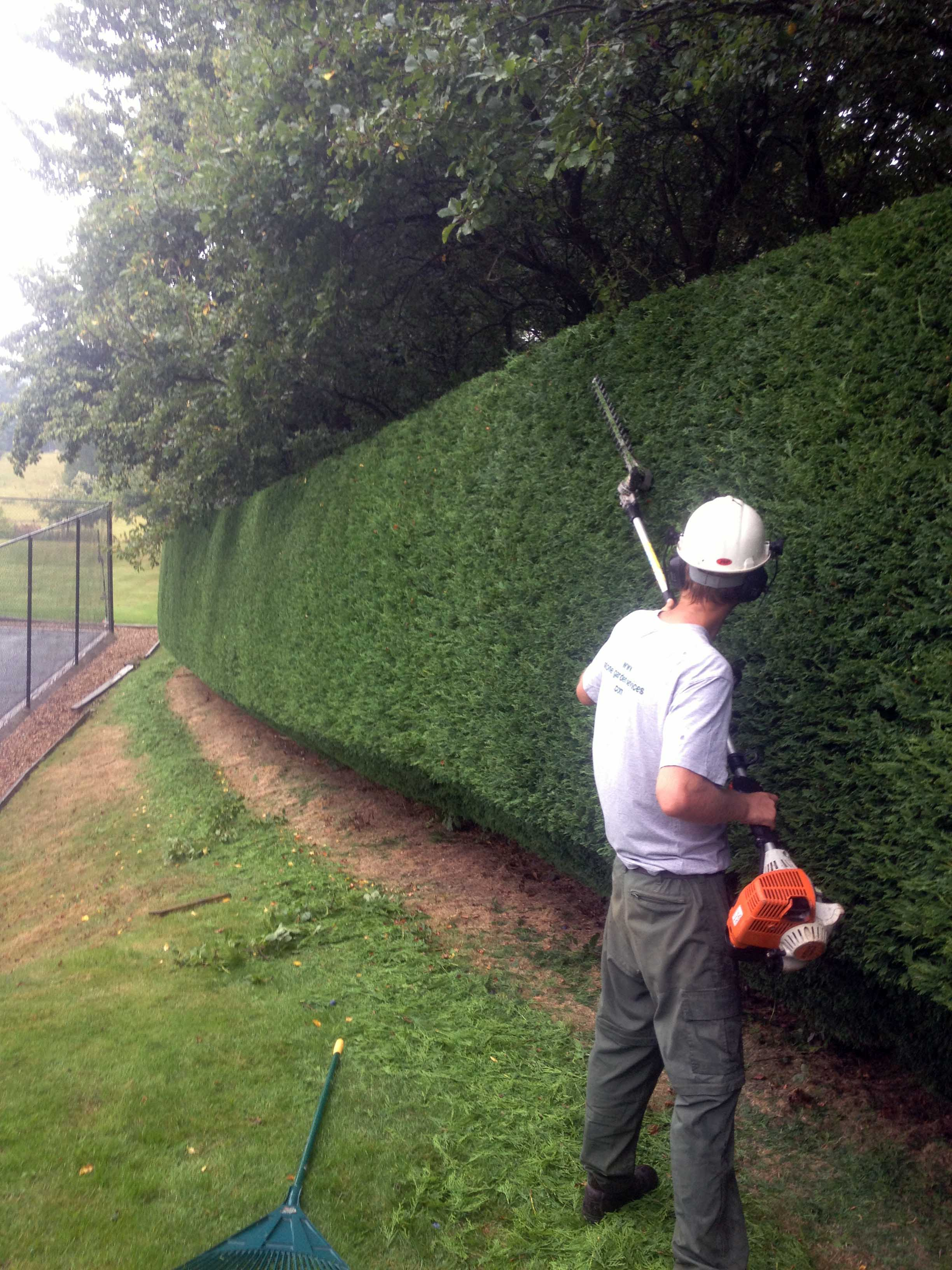 broad leaf ground maintenance 21.JPG