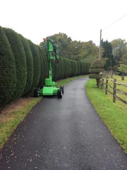 broad leaf ground maintenance 26.JPG