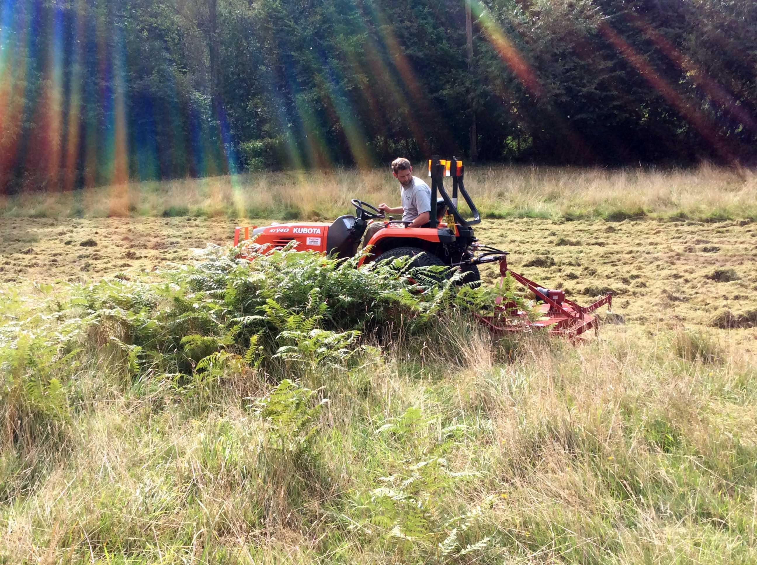 broad leaf ground maintenance 28.JPG