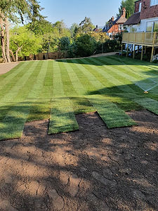 new turf laying