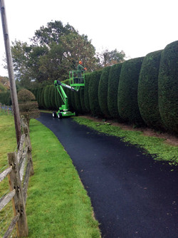 broad leaf ground maintenance 10.JPG