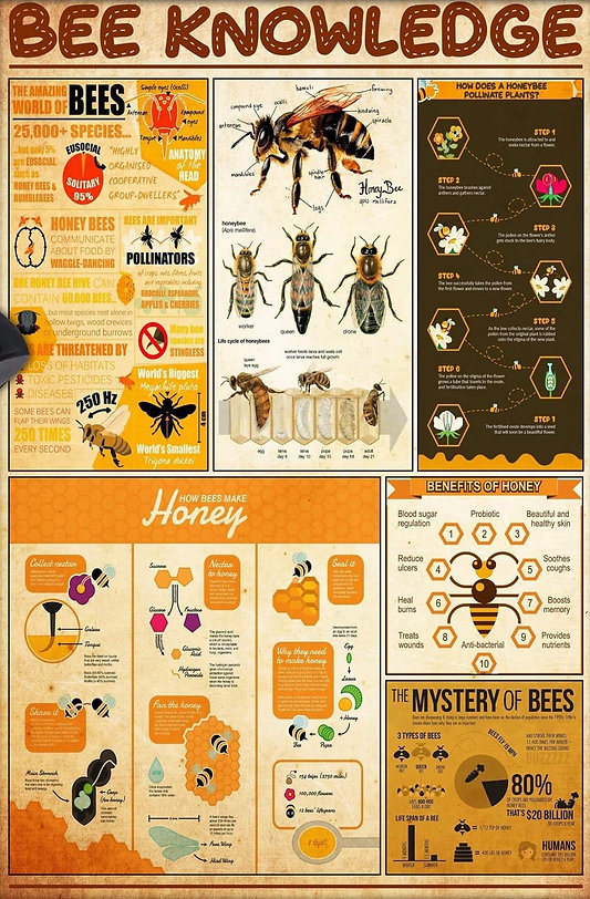 BEE KNOWLEDGE_Steves Bees.jpg