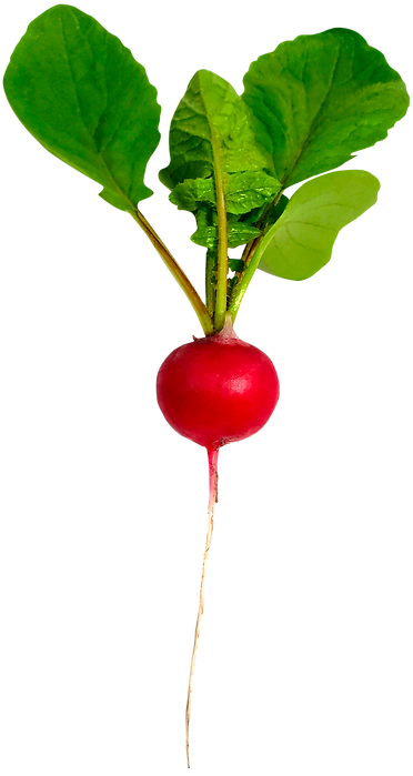 Radish-Red-Single.png