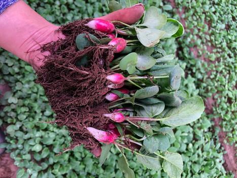 Soil Exudates