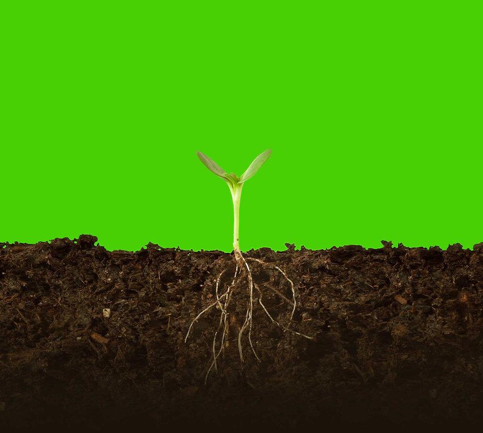 plantwithdirt_gradient_green.jpg