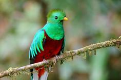 quetzal-01.jpg