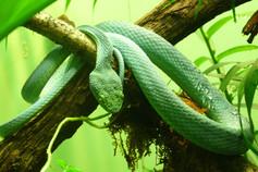 serpent-13.jpg