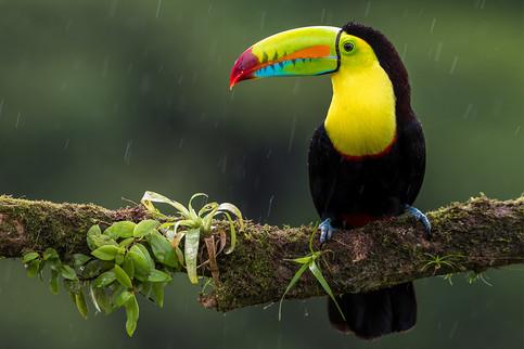 toucan-23.jpg