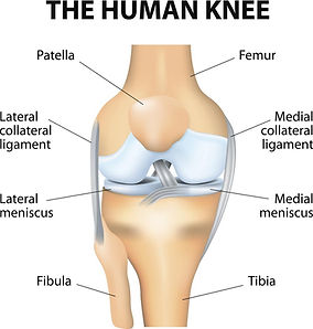 knee anat.jpg