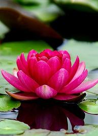 flowers-3294463_960_720 cropped.jpg