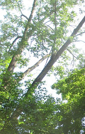 Tree tops2.jpg