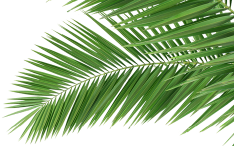 Lovepik_com-400903858-coconut-leaves-gre
