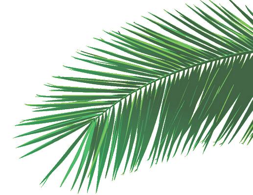 feuilles-tropicales-png-4 copy.png
