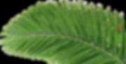 Lovepik_com-400903858-coconut-leaves-gre