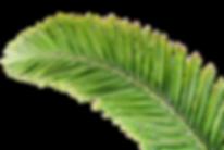 kisspng-arecaceae-palm-branch-leaf-tree-