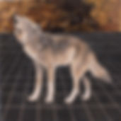 alexis-kandra-4x-Howling-Wolf.jpg