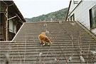 nolan-price-japan-rooftop-cat.JPG