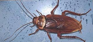 evan-lovett-roach.JPG