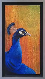 tdee-peacock-2.jpg