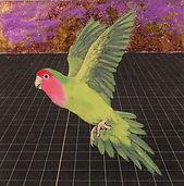 alexis-kandra-4x-Rosy-Faced-Lovebird.jpg