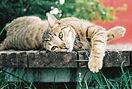 nolan-price-mystery-cat.jpg