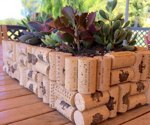 DIY Planter using wine corks