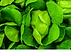 Green leafy.png