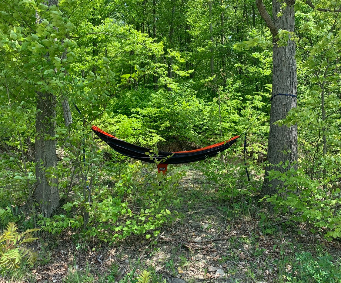 Hammocks around property