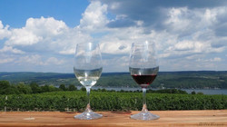 Dr-Franks-wine-view-cam