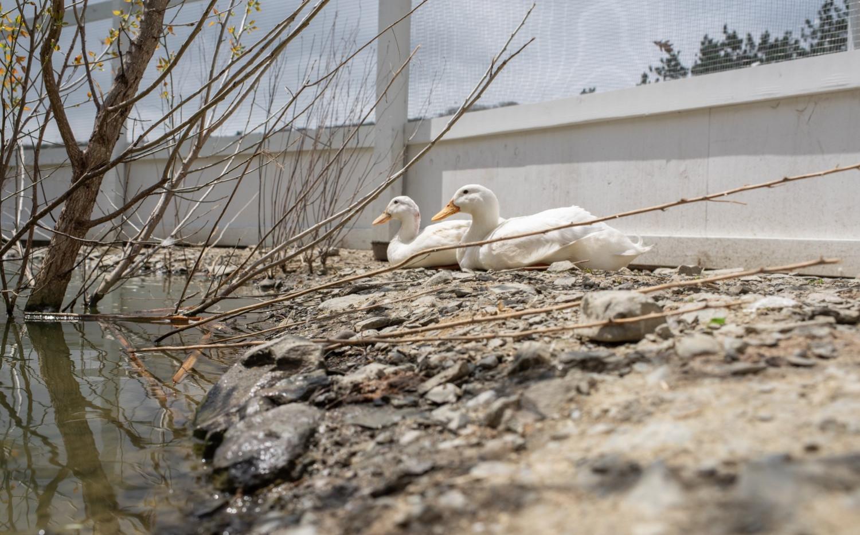 Seven Duck Sanctuary