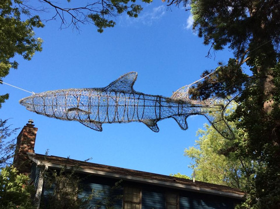 8ft Reef Shark Hanging in the trees