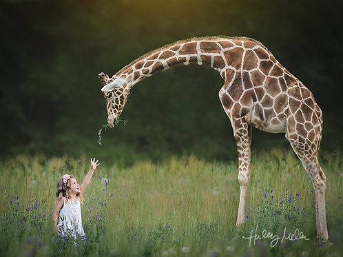 On Sale! Giraffe and Field PNG Digital Backdrop